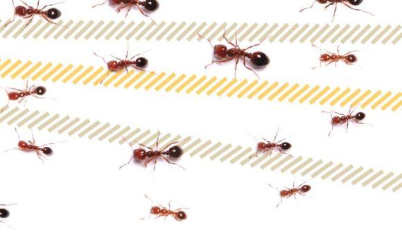 Ants_web photo